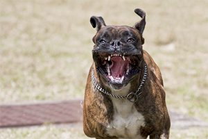 Ferocious Dog Goes After Next Victim