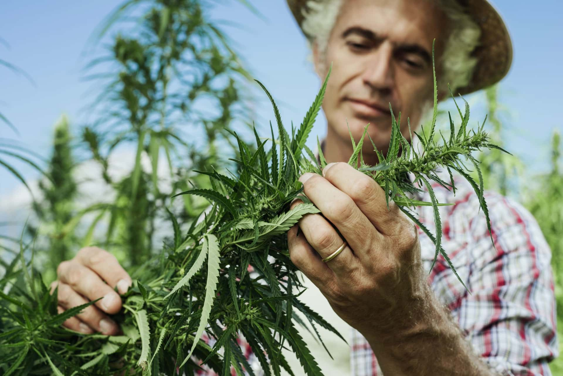 California Just Legalized Pot. What Happens Now?