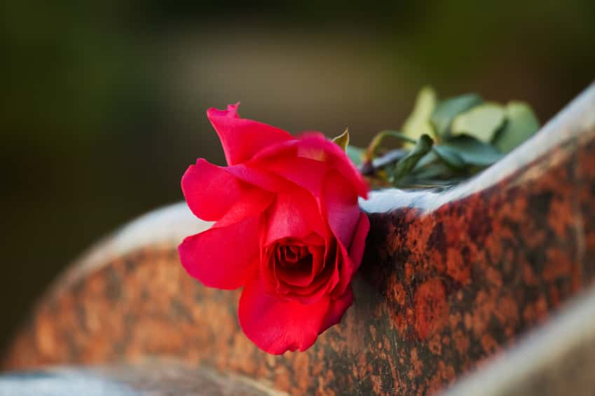 Red rose resting on marble headstone