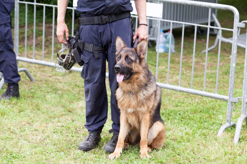 Image of a K-9 officer